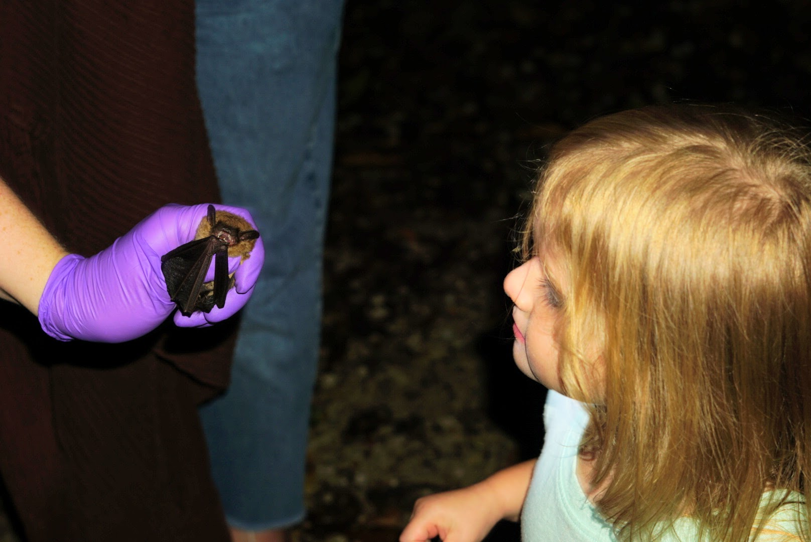 Big brown bat survey demo