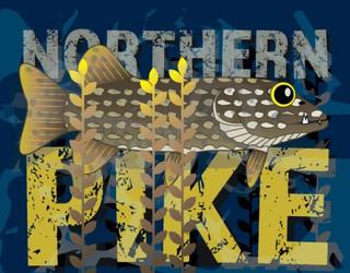 Northern Pike Illustration