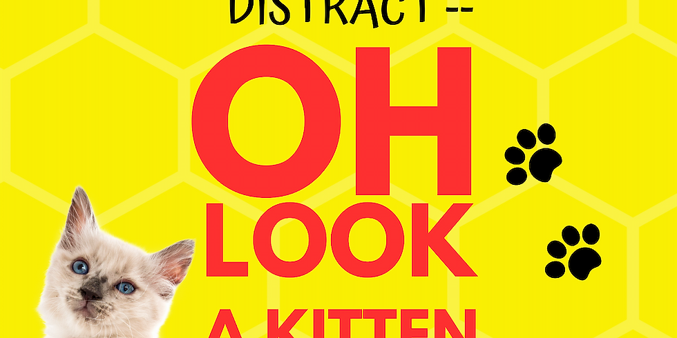The Internet is Distract -- Oh Look A Kitten!
