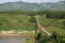 Lam Dong coffee farm