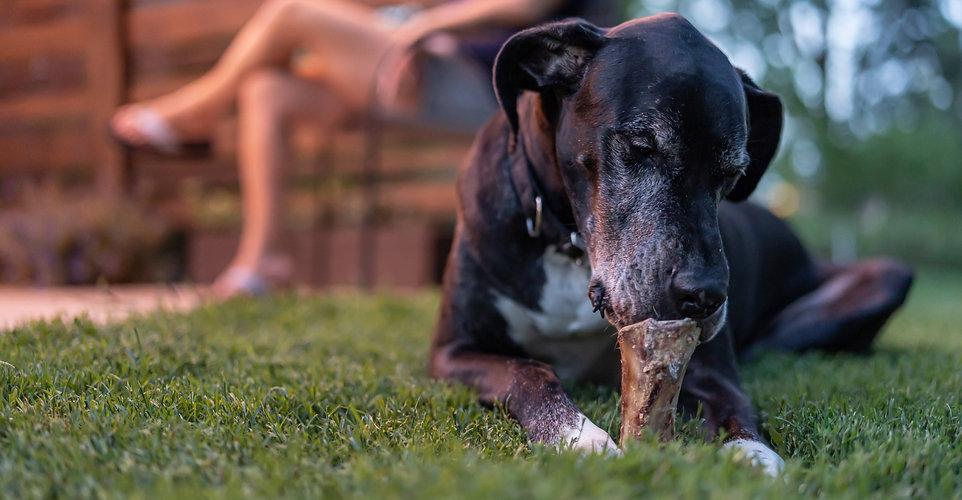 barknbig_premium dog chews.jpg