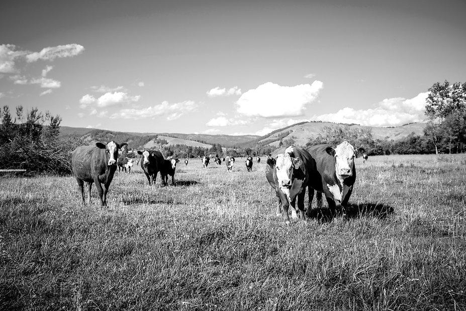 BarknBig_pasture-to-chew.jpg