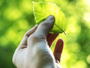 Warum nachhaltige Unternehmen erfolgreicher sind