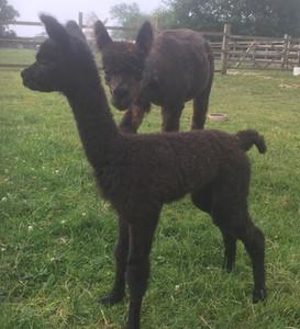 Iandigo and Mum Calypso