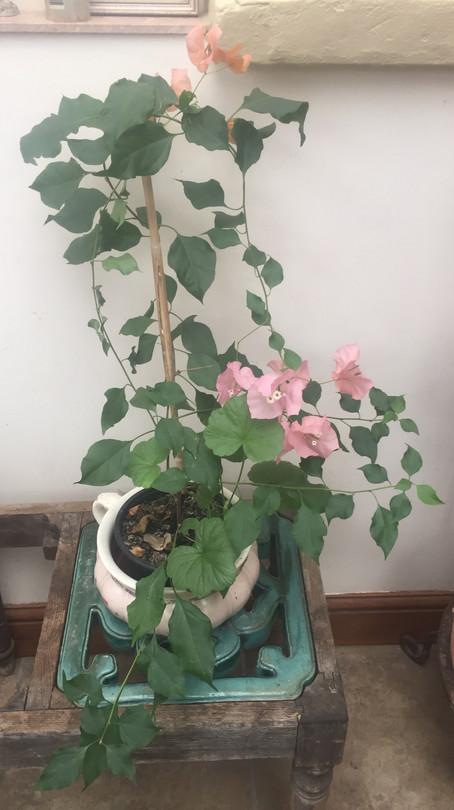Cheery Winter Flower