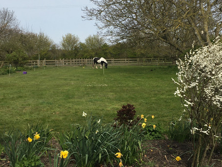 Paca Punch Bank Holiday Weekend Garden Tips 30th April