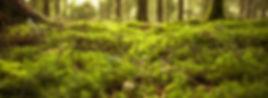 forestfloor_slider.jpg