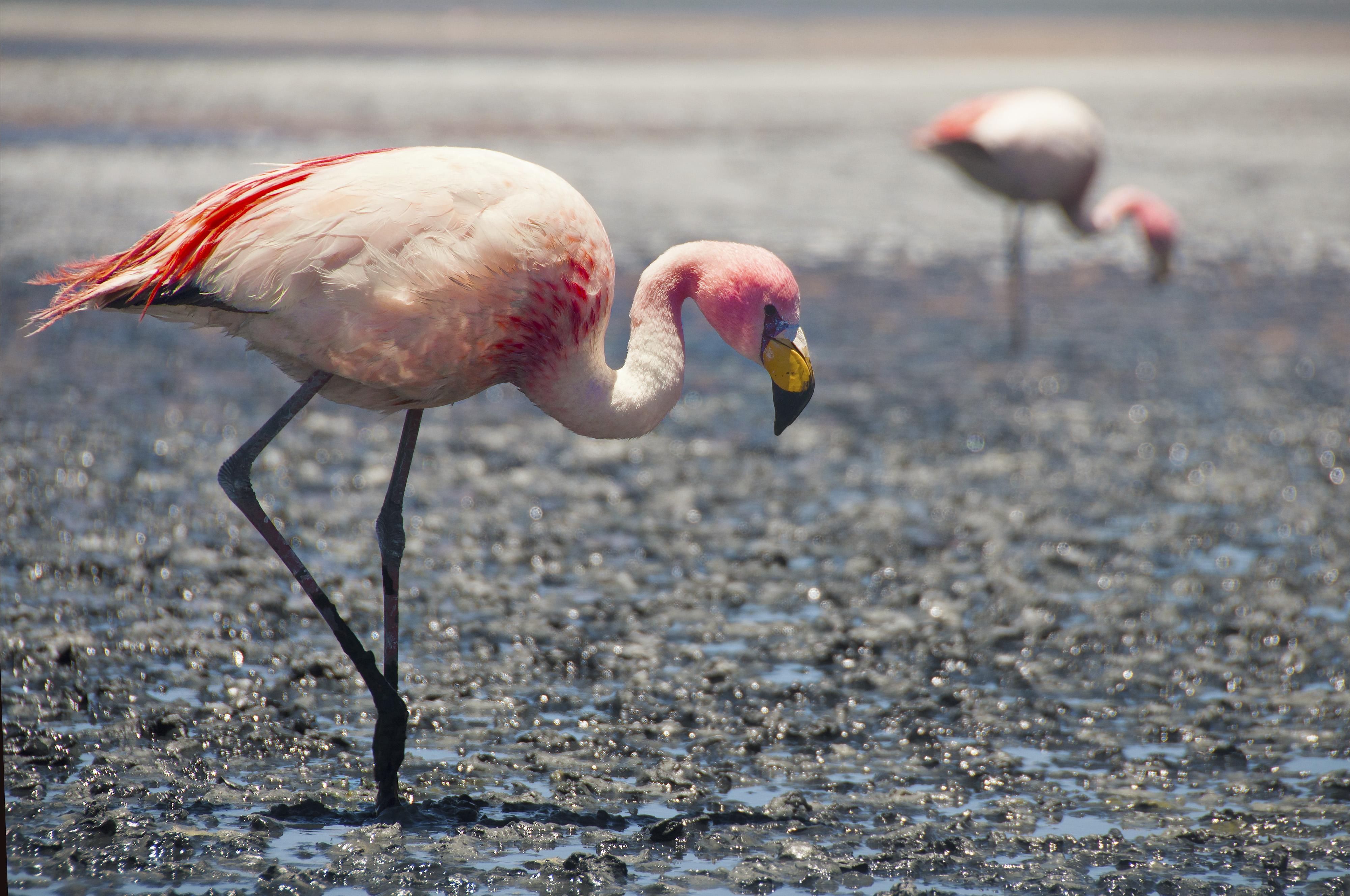 Flamingo Walk