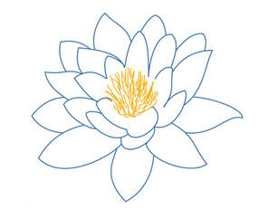 Lotus bleu & orange.jpg