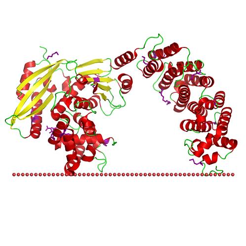 Collagenase膠原蛋白酶