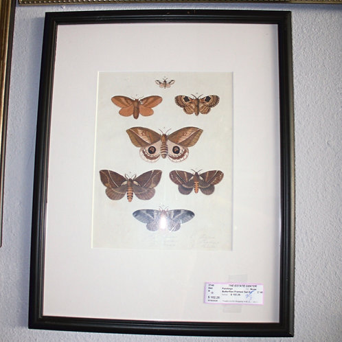 Set of 3 Butterfly Pictures