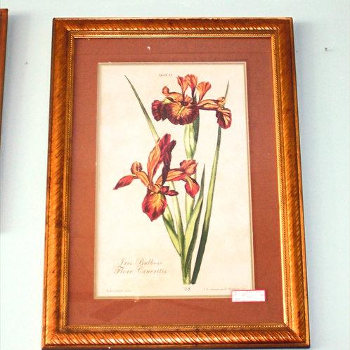 1754 Bulboso Flore Cineritis F.M. Seligmann B.R. Dietzchin #28
