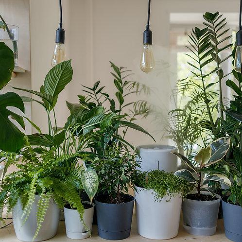 The Plant Mom Box - Small