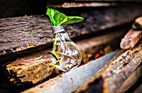 close-up-of-beer-bottles-on-wood-315658.