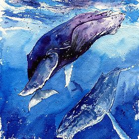 """""""The Trifecta"""" Humpback Whales"""