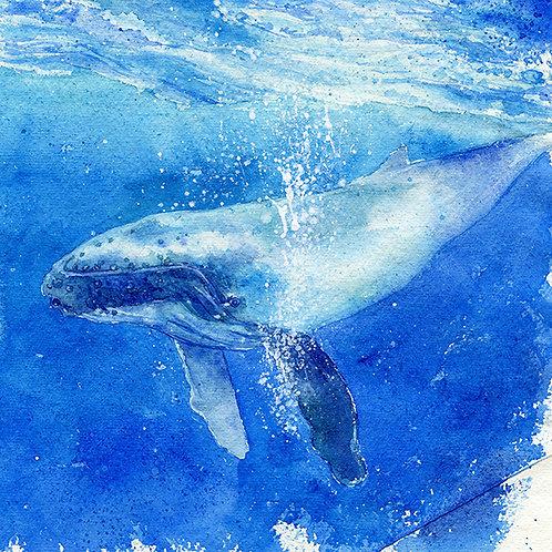 """Ha'apai"" Humpback Whale"