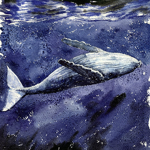 """Shallow"" Humpback Whale"