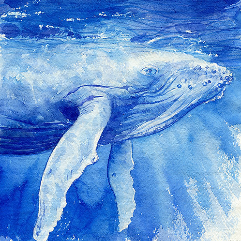 """Vava'u"" Humpback Whale Culf"