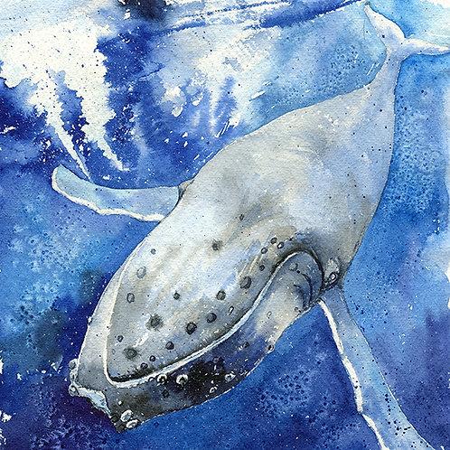"""""""Tonga"""" Humpback Whale"""