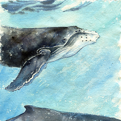 """Tropical Waters"" Humpback Whales"