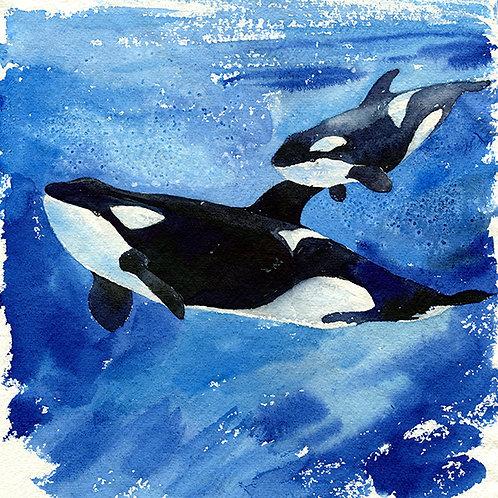 """""""Katina and Unna"""" Mama & Baby Orca Whales"""