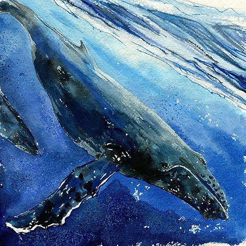 """""""Mo'orea"""" Humpback Whale"""