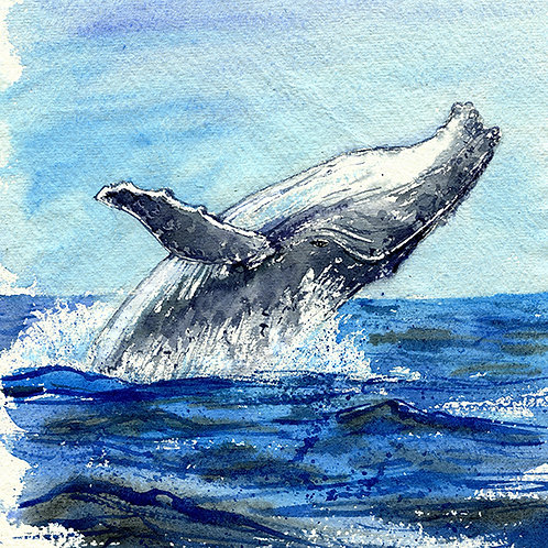"""Happy Humpy"" Humpback Whales"