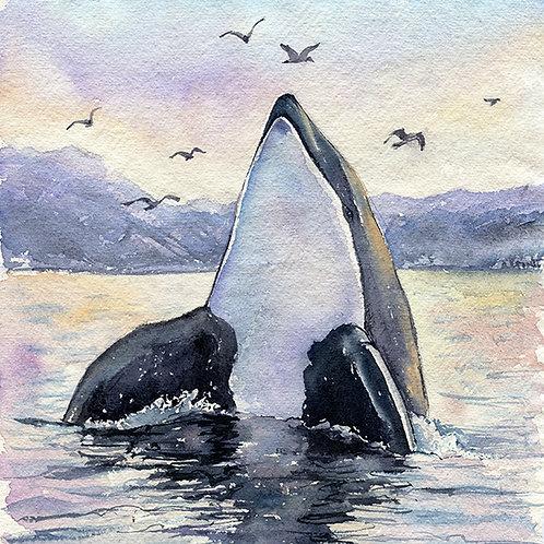 """""""Freja"""" Orca Whale"""