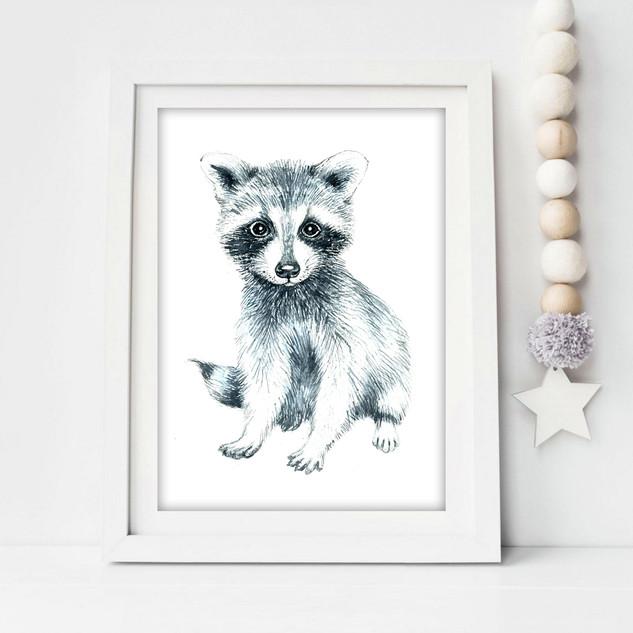 baby racoon.jpg