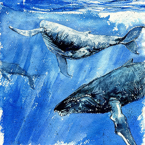 """Excitement"" Humpback Whales"