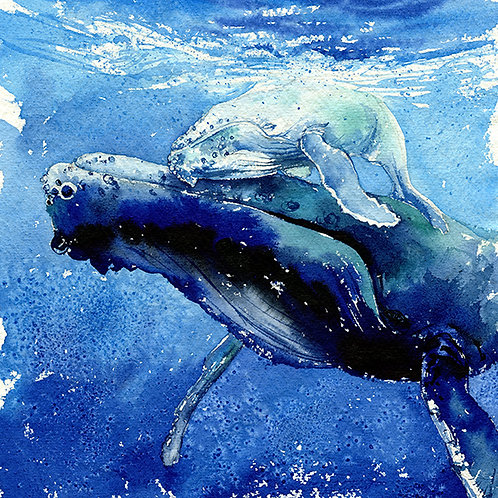 """""""Sleeping In The Water"""" Mama & Baby Whales"""