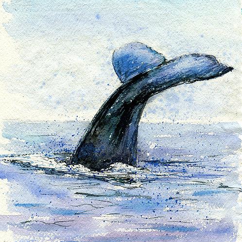 """Hugo"" Humpback Whale Tail"