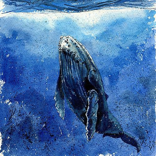 """Still"" Humpback Whale"