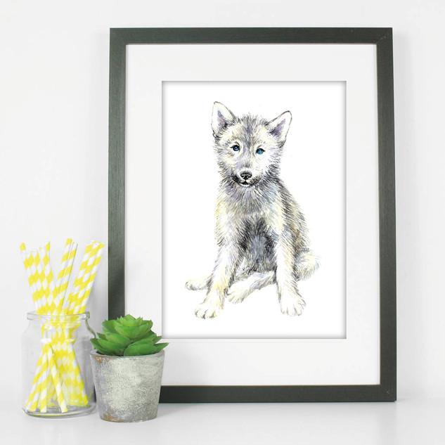 baby wolf.jpg