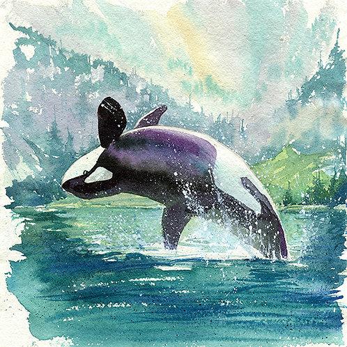 """Marina"" Orca Whale"