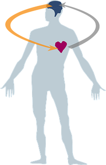 heart-2546039__340.png