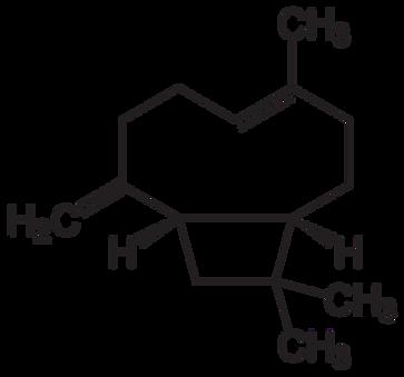 800px-Beta-Caryophyllen.svg.png
