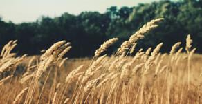 Décodage de la maladie coeliaque / intolérance au gluten (pistes)