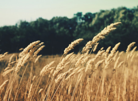 Let Wheat and Weeds Grow Together
