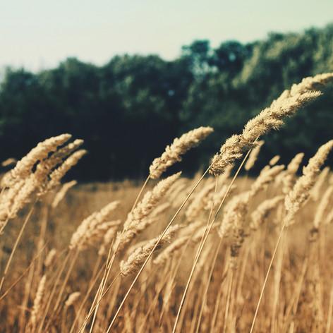 Wheat SPKS Pest Control Solar System