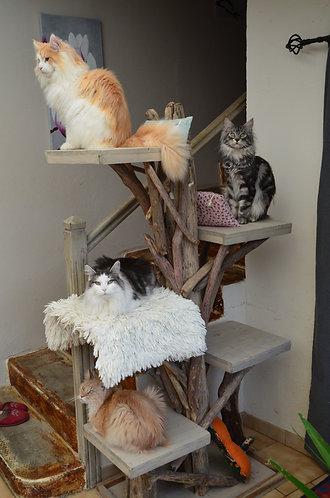 Arbre à chats 5 plateaux