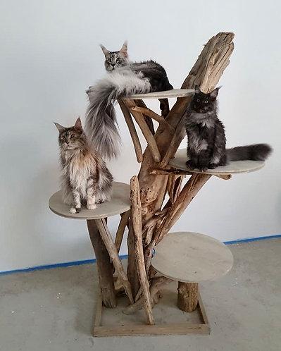 Arbre à chats plateformes rondes