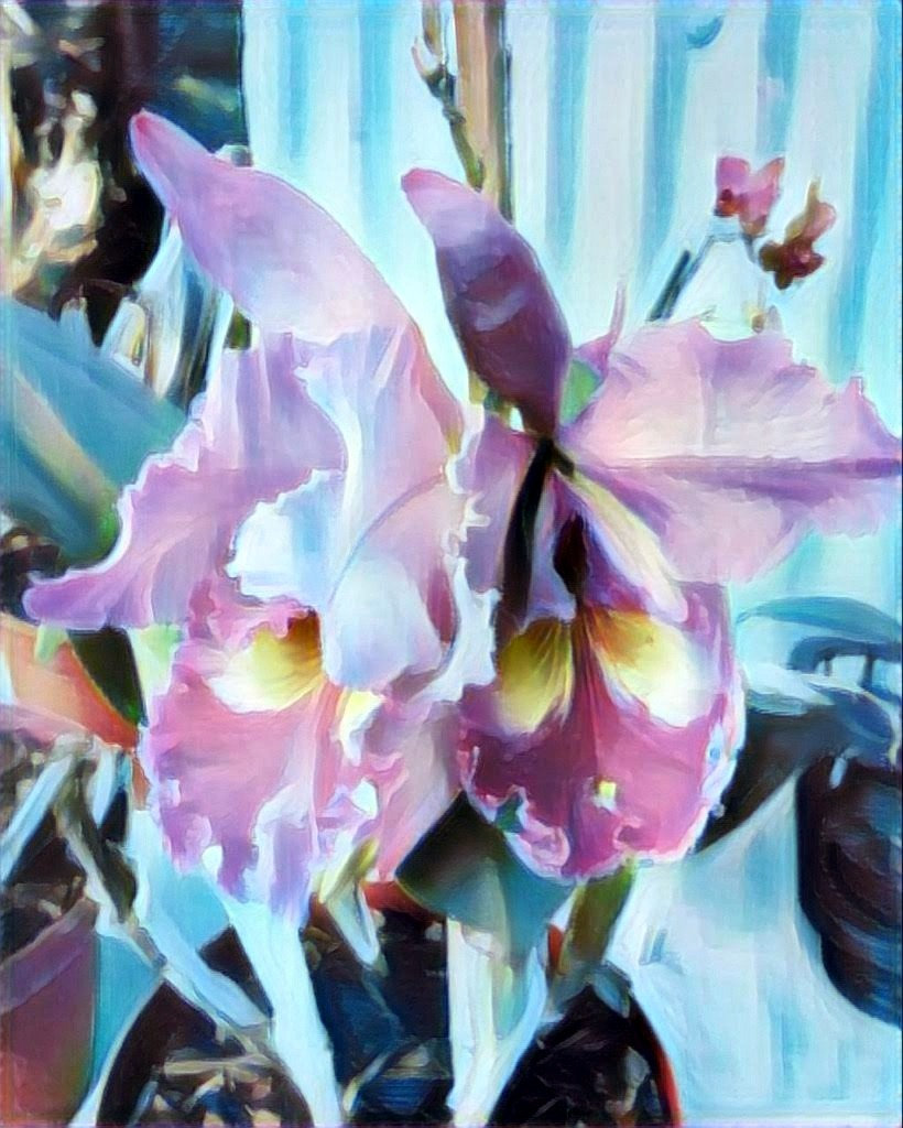 orchids_edited.jpg