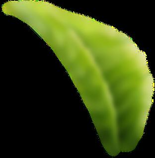 leaf desfoque.png
