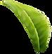 leaf normal.png