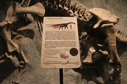 Camarasaurus sign in context