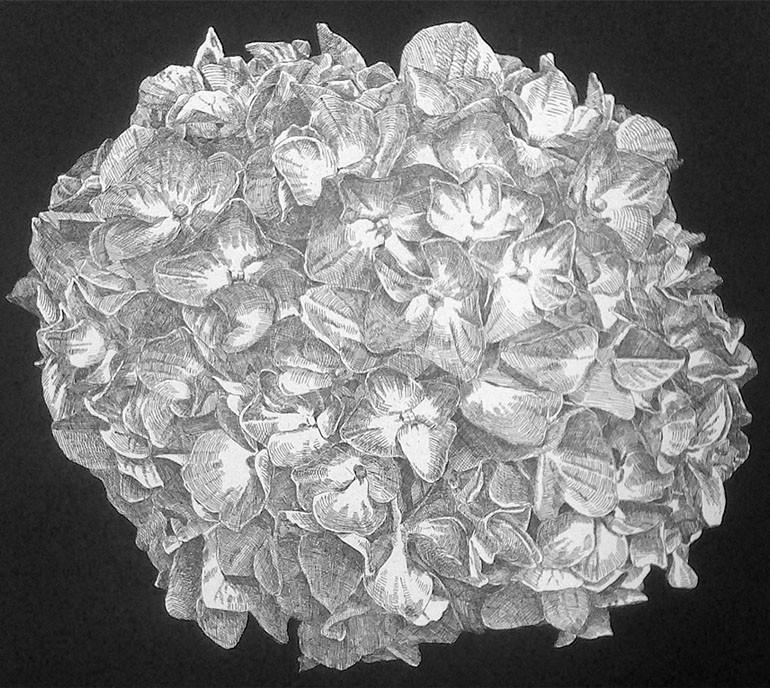 hydrangea1.jpg