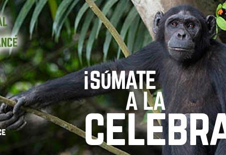 Celebramos el Día Mundial del Chimpancé