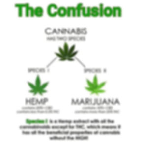 cannabis-the-confusion2.jpg