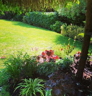 Under planting under Willow